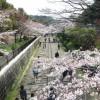 京都ギャラリー インクラインのどかな花見